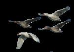 Птицы  разные  0_51c8e_6cb7db9d_S
