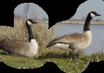 Птицы  разные  0_51c98_c4e601_S