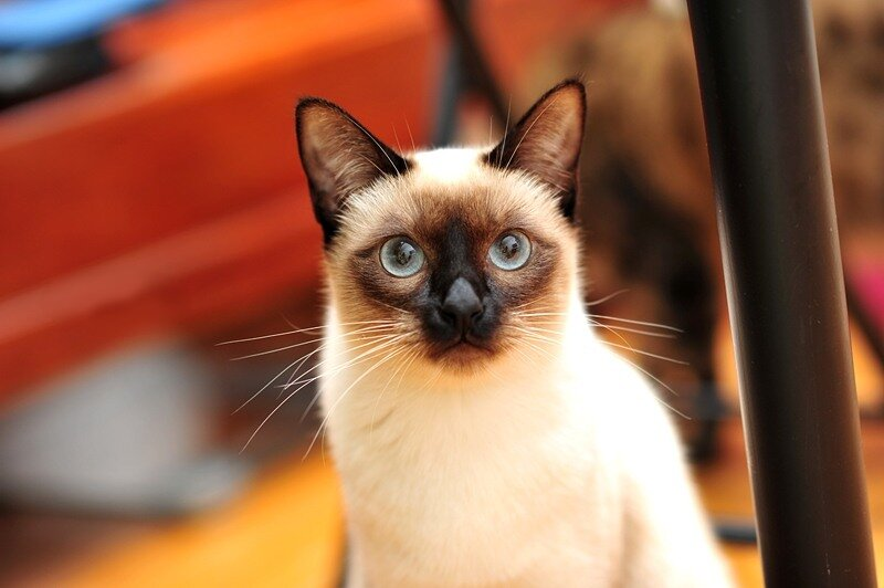 Кошки  0_5290d_5e825c1e_XL