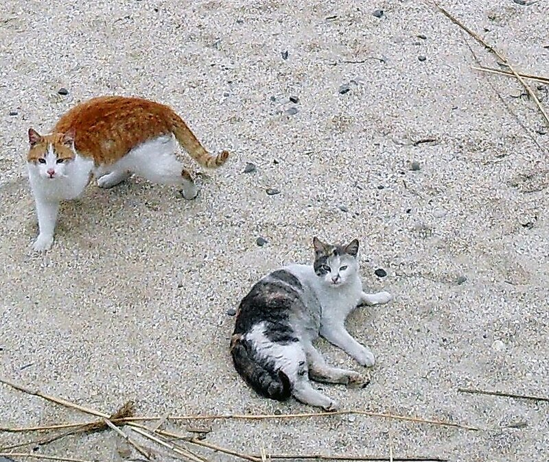 Коты у моря