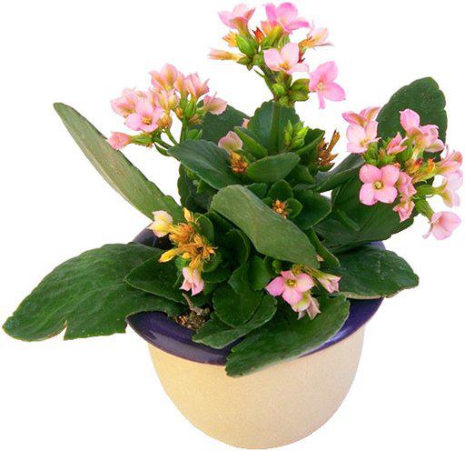 Window Plants Цветы на подоконниках - цветут и радуют всех н…