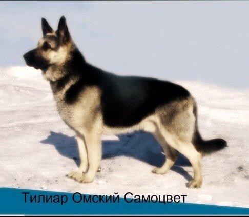 Россия, Украина и СССР 0_46fcc_a94bc53_L
