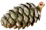 wlop_ev_forest (48).png