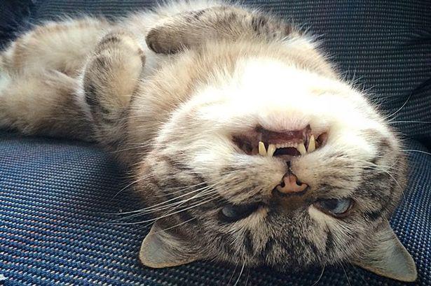 Кошка-вампир