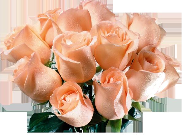 Открытка анимация розы