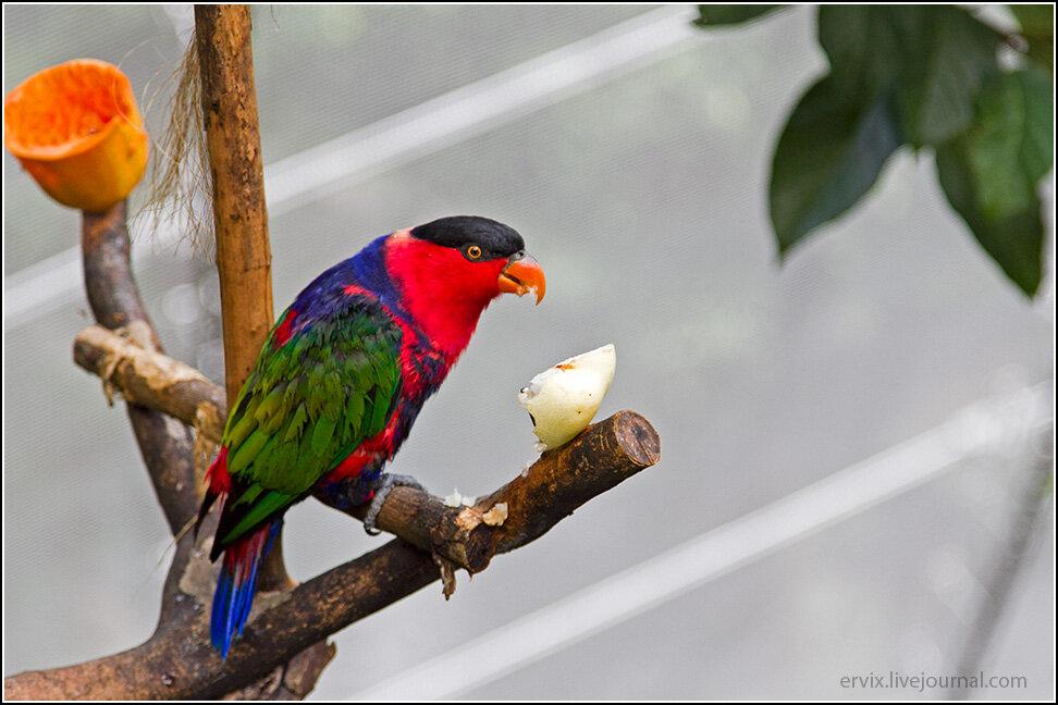Попугай в центральном парке гонконга