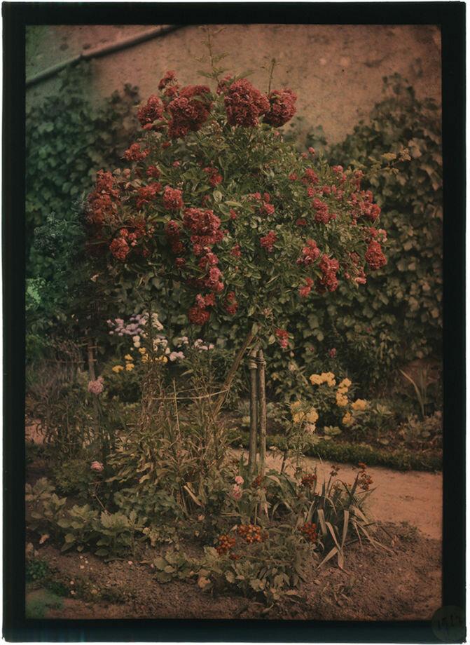 1912. В саду