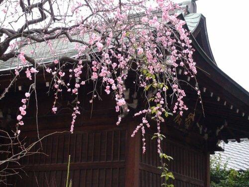 Умэмацури в храме Юсима