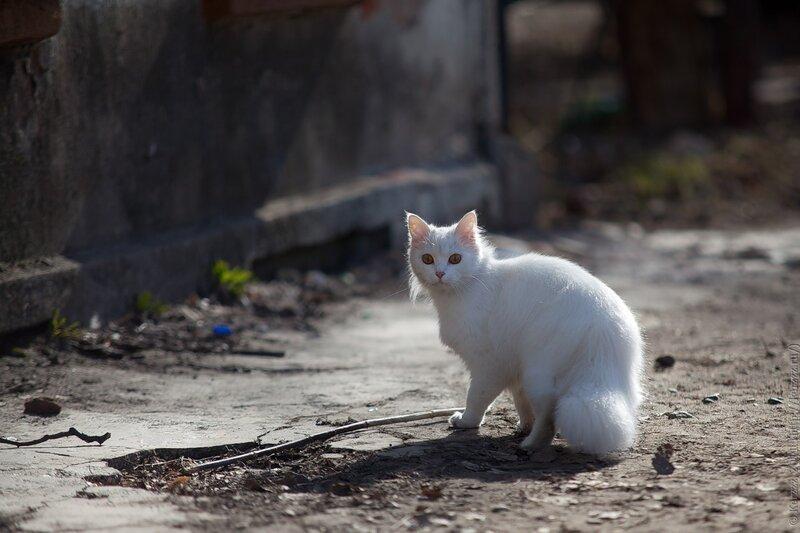 Местная кошка (2)