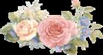 rosenrosa002.png