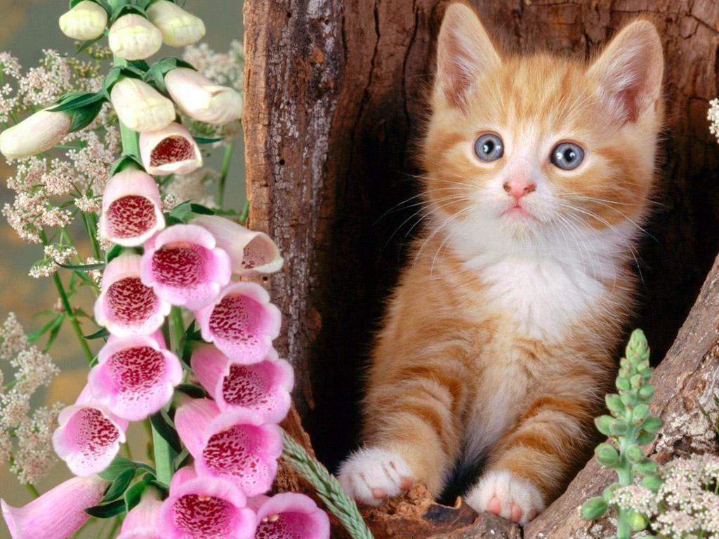 Красивые открытки с цветами и животными