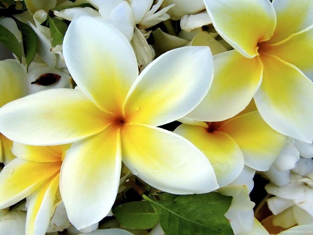 Цветы  для Кришны