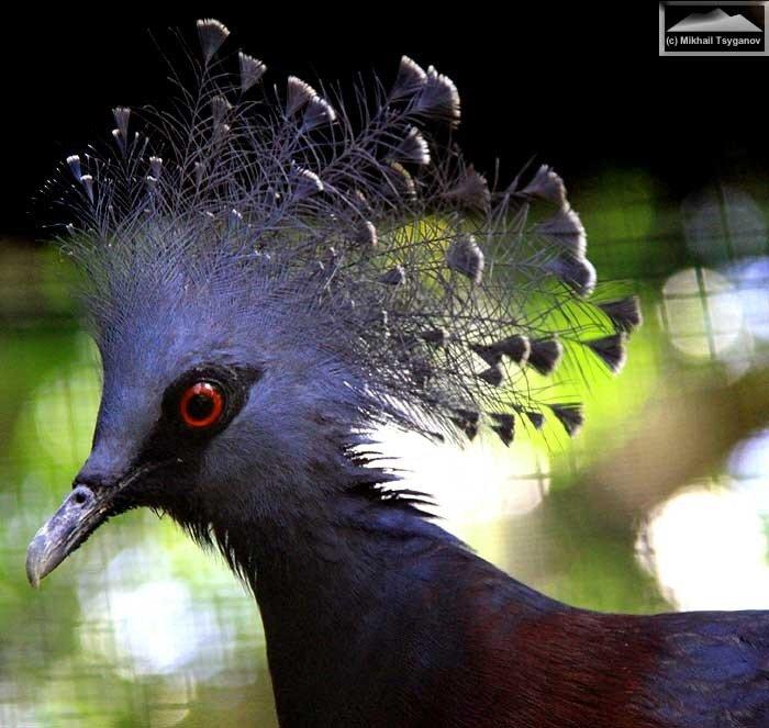 Самые большие птицы мира