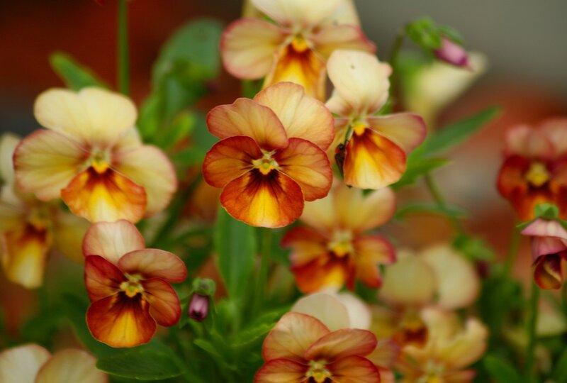 Они зовут меня...  Цветы и бабочки порхают на лугу, Меня пленительным чаруя ароматом.  И я бегу по ним, бегу по ним...