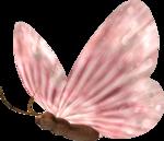 бабочки 0_58f1a_82bfb79a_S