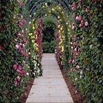«Скрап -набор Мой сад» 0_5e20e_774ffb58_S