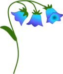 cccbluebells.png