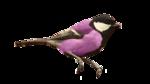 Птицы  разные  0_51c3f_65a81366_S
