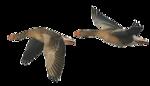 Птицы  разные  0_51c85_15e7ef9_S