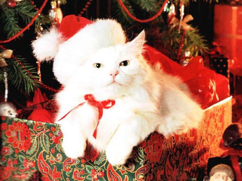 Кошки  0_52933_e8948e45_XL