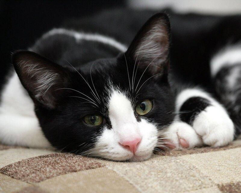 Кошки  0_52946_4a5edcdc_XL