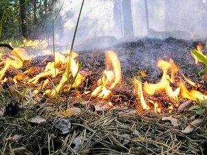 Почти 200 руководителей оштрафованы в ДФО за нарушения закона об охране лесов от пожаров