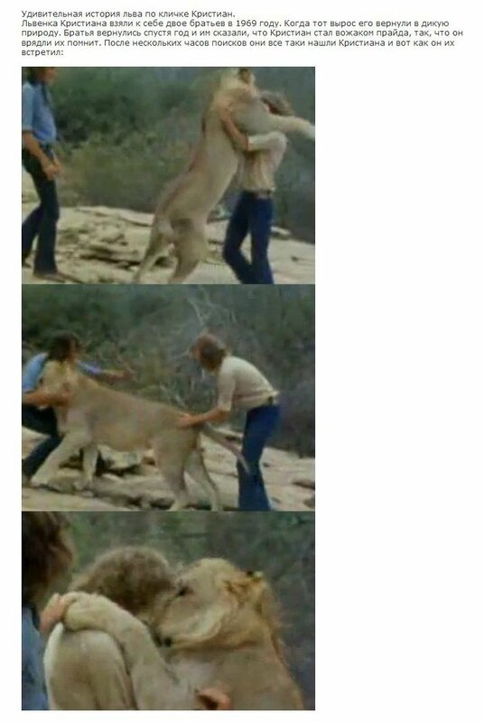 есть у животных: