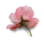 natali_design_day_flower9-sh.png