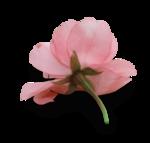 natali_design_day_flower9-sh.png