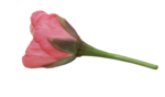 natali_design_day_flower11.png