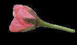 natali_design_day_flower11.png