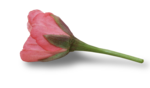 natali_design_day_flower11-sh.png