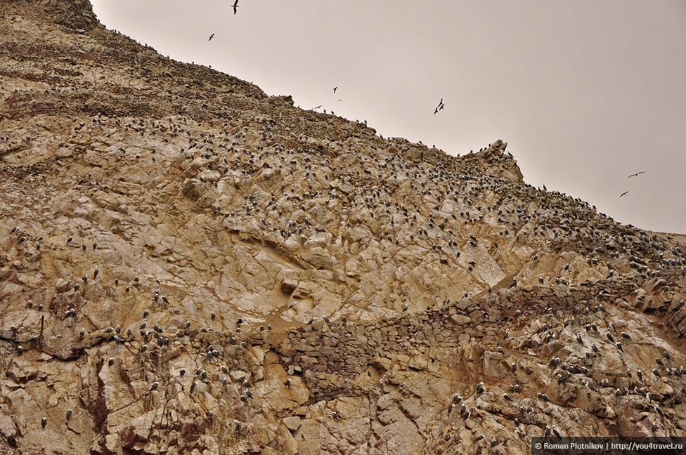 0 161740 ecd7b2be orig Национальный парк Паракас и острова Бальестас в Перу