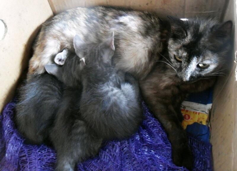 Из хроники кошачьей жизни