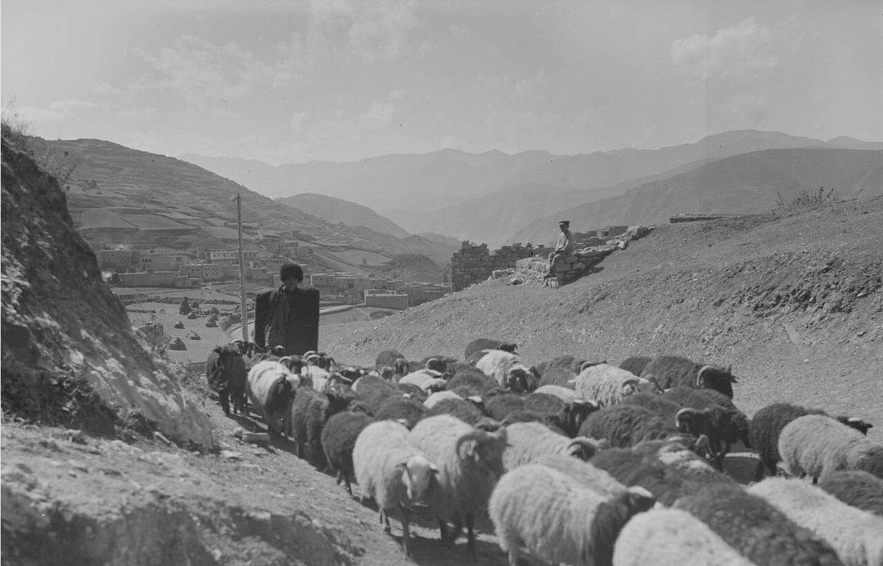 Дагестанский пастух