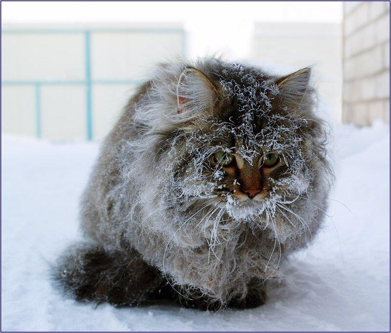 Лучшие фотографии 2012 года по версии Яндекс.Фоток