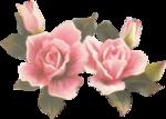 rosenrosa076.png