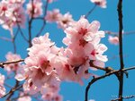spring_0024
