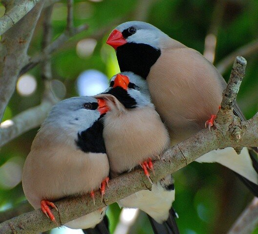 Мир птиц / The world of birds / Фотогалерея.  165). ФОТОПОДБОРКА ИЗ...