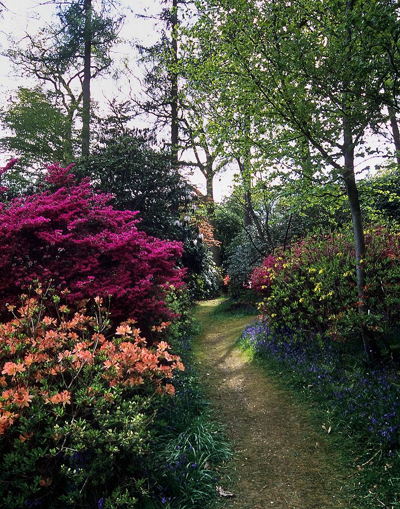 цветение в темном углу сада фото наблюдаем цветущими уже