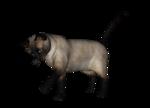 сиамские кошки (4).png