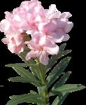 wlop_vivaldi_spring (11).png