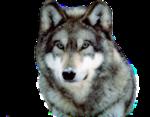 Лиса,волк  0_50918_b91627c8_S