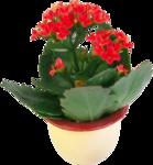 Домашние цветы 54