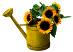 SD CS WATERING CAN.png