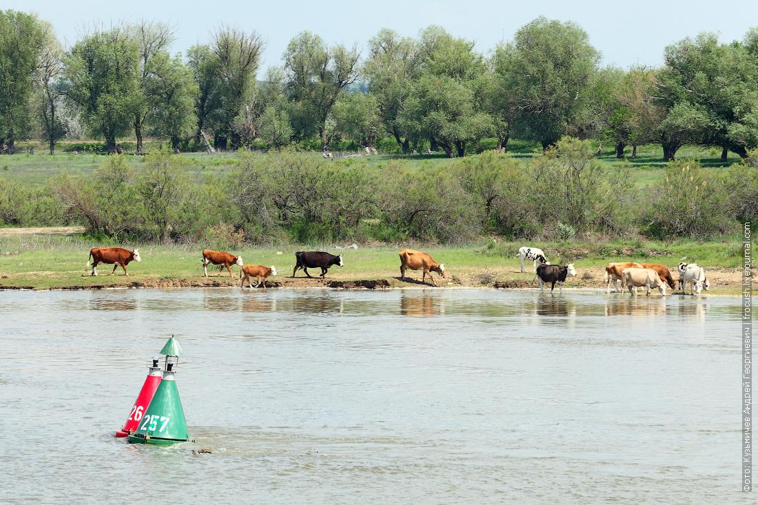 река Бахтемир круиз в Казахстан на теплоходе Русь Великая