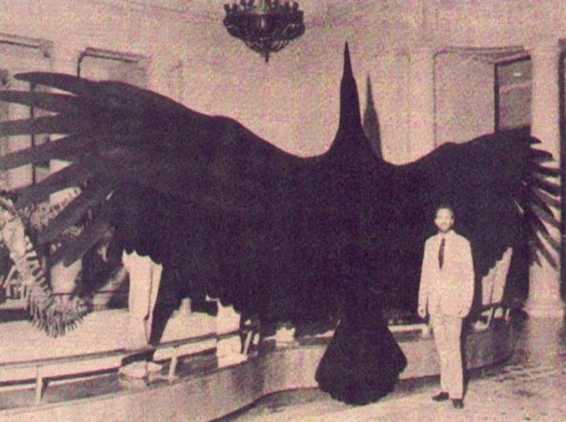 Аргентавис (Argentavis magnificens) — самая крупная летающая птица из известных науке. Населял Аргентину 6 млн. лет назад.jpg