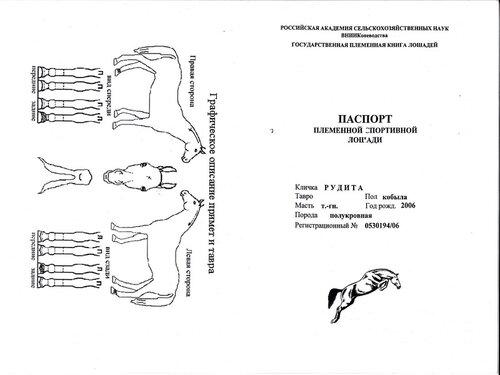 Как сделать паспорт прогулочной лошади