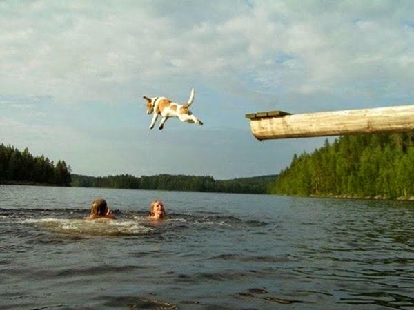 Радостные фотографии прыгающих людей и животных 0 130945 3094a981 orig