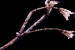 ldavi-ThePoet'sKeepsakes-driedflower7.png